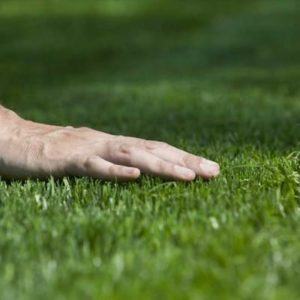 Lawn Care Stow Ohio